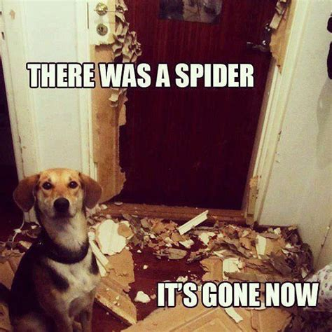 Gay Dog Meme - need a laugh these animal memes should do the trick pets spider meme and this is me
