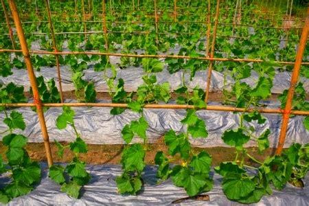 best compost for vegetable garden the best mulch for a vegetable garden doityourself