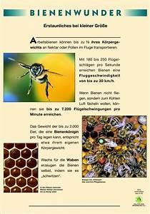 Was Vertreibt Bienen : naturlehrpfad der bienen besserer imkerhonig ~ Eleganceandgraceweddings.com Haus und Dekorationen