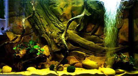 aquarium wallpapersfish backgrounds images pictures