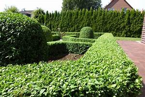 Online Pflanzen Kaufen : buchsbaum als beeteinfassung pflanzen online kaufen auf ~ Watch28wear.com Haus und Dekorationen
