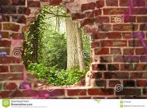 Loch In Der Wand : waldansicht durch ein loch in der wand stockfoto bild ~ Lizthompson.info Haus und Dekorationen