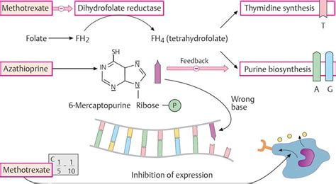 Drugs Acting On The Gastrointestinal System