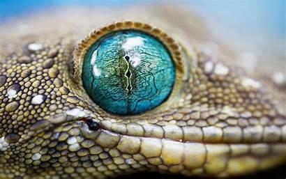 Snake Eye Cool