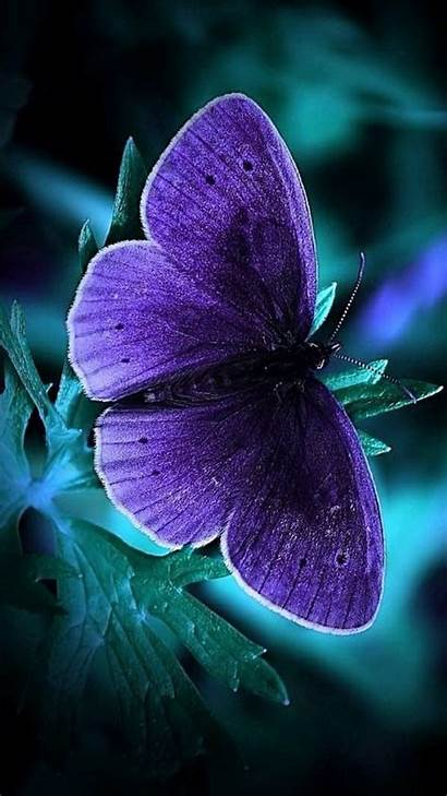 Phone Wallpapers Cool Dark Butterfly Latest Purple