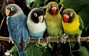 Love Bird Wallpapers - Wallpaper Cave  Bird