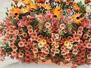 Jardiniere Fleurie Plein Soleil : jardini res fleuries faire ses jardini res entretien des ~ Melissatoandfro.com Idées de Décoration