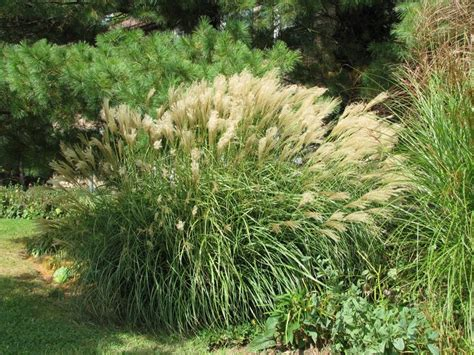 landscape grass types 71 best images about simply grass on pinterest nature wallpaper grass type and the grass