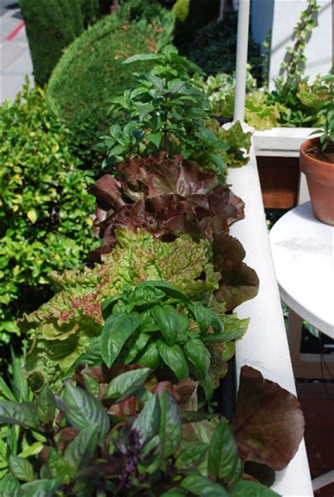 choosing containers  container gardening