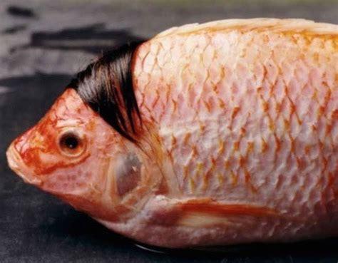 fishy water wig fish funny faxo