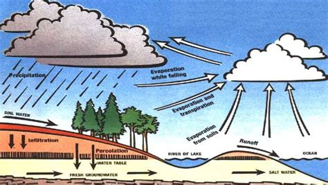 Water Cycle Diagram Earthguide by Water Cycle Webquest