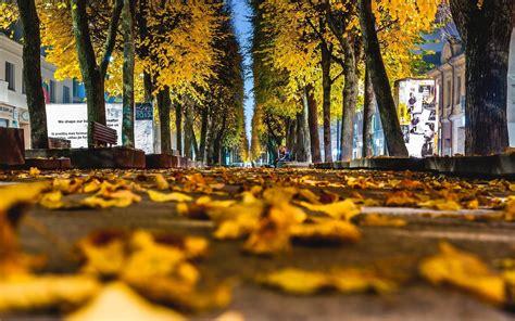 nature landscape beauty beautiful leaves yellow autumn