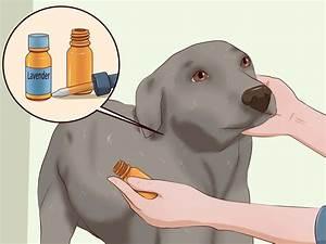Comment Tuer Les Puces : 3 mani res de tuer les puces d 39 un chien wikihow ~ Farleysfitness.com Idées de Décoration