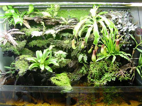 terrarium plants terrariums for cps petpitcher com