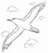 Albatross Flight Coloring sketch template