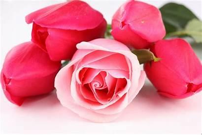 Rose Pink 3d Desktop Pixelstalk