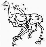 Ostrich Coloring Pages Animals Printable Preschool Animal Kindergarten sketch template