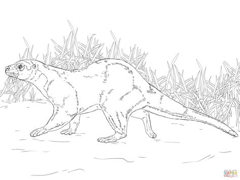 River Otter Coloring Sheet Coloring Pages