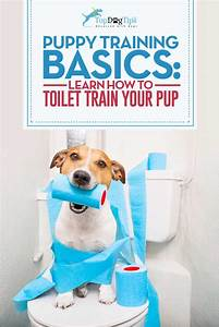 how to toilet train a puppy effectively step by step With how to properly train a dog