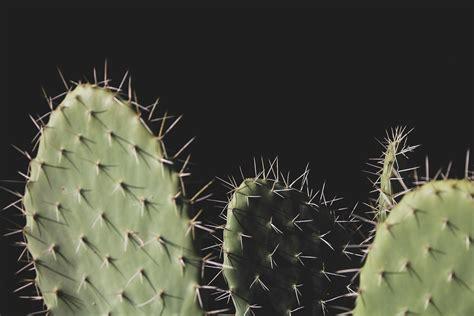 kostenloses foto zum thema agave farbe gruen