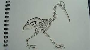 Kiwi Bird Skeleton by curseyouheman on DeviantArt