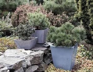Kübel Bepflanzen Ideen : winterharte k belpflanzen f r die terrasse mein sch ner garten ~ Buech-reservation.com Haus und Dekorationen