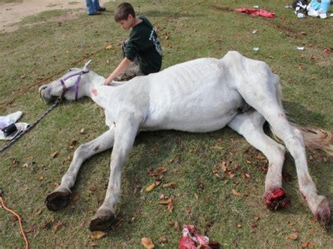 Fundraiser by Palmetto Farms : PALMETTO FARMS HORSE RESCUE ...