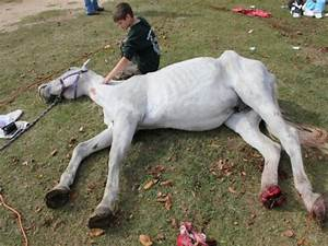 Fundraiser by Palmetto Farms : PALMETTO FARMS HORSE RESCUE