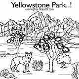 Coloring Pages Park National Yellowstone Printable Drawing Hilltop Getcolorings Template Getdrawings sketch template