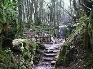 Star Stairs Treppen : mystischen wald treppen download der kostenlosen fotos ~ Markanthonyermac.com Haus und Dekorationen