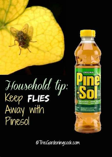 what is to keep flies away 25 best ideas about flies away on pinterest keep flies away natural fly repellant and flying