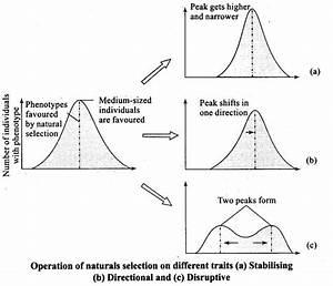 Ncert Exemplar Problems Class 12 Biology Evolution