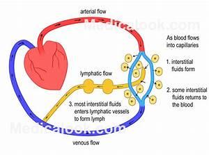 Lymph Fluid