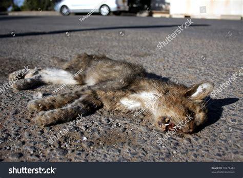 Dead Cat On An Asphalt Road Stock Photo 18274444