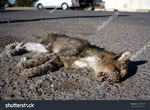 Dead Cat On Road | www.imgkid.com - The Image Kid Has It!