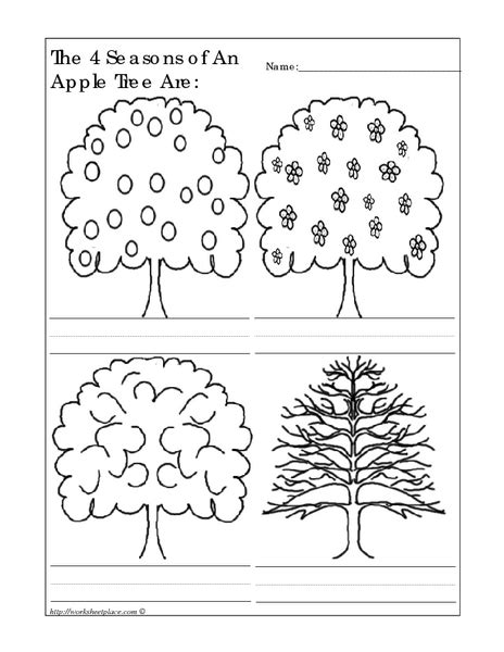 the 4 seasons of an apple tree are worksheet for kindergarten 1st grade lesson planet