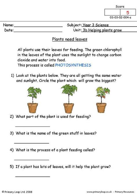 science plants  leaves worksheet primaryleapcouk