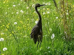 Decoration Jardin Metal : images gratuites herbe oiseau prairie prairie faune ~ Teatrodelosmanantiales.com Idées de Décoration