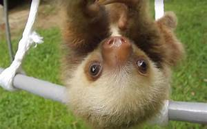 Packing List For Family Vacation These Cute Baby Sloths In Costa Rica Will Cure Your Winter