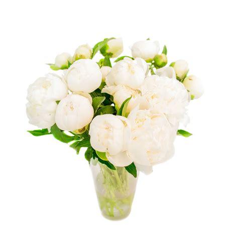Baltās peonijas ziedu piegāde Rīgā Pušķis no baltās peonijas