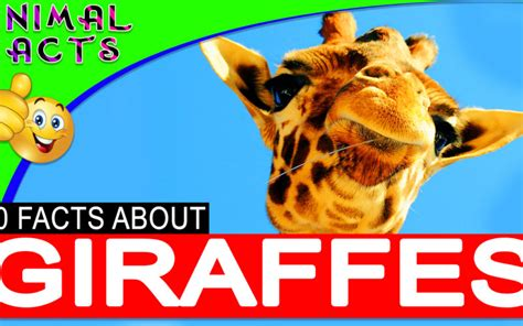 African Animals Animal Facts