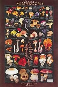 Forest Floor Mushrooms Poster