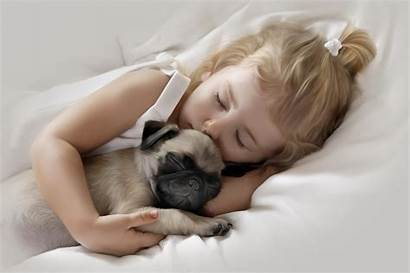 Sleeping Pug Puppy 4k Wallpapers Adorable Bed