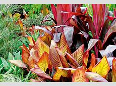Tropical Garden Plan Affordable Small Garden Idea With