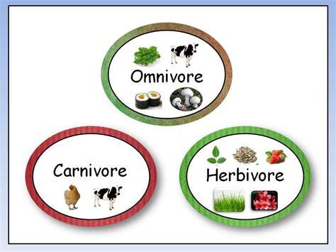 Omnivore, Carnivore, Herbivore Youtube