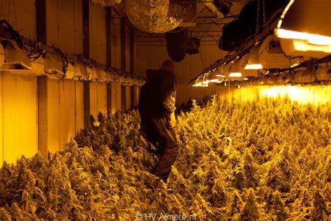 grote wietplantage opgerold  bedrijfspand de vaart hv