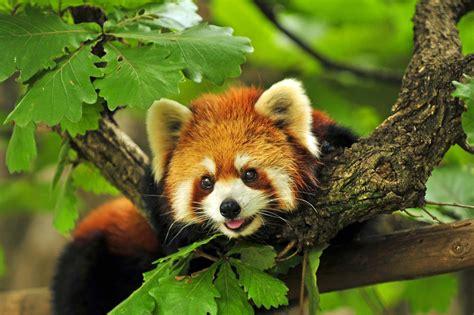 Fascinating Wildlife Of Nepal  Mosaic Adventure
