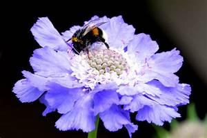 Stauden Für Den Schattigen Garten : blaue bl ten f r den blauen garten ~ Markanthonyermac.com Haus und Dekorationen
