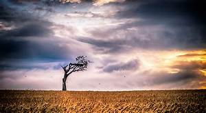Sky, Clouds, Trees, Landscape, Field, Wallpapers, Hd, Desktop, And, Mobile, Backgrounds