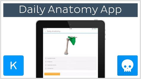 Learning Anatomy With Flashcards App Daily Anatomy  Kenhub Youtube